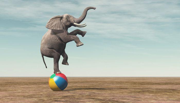 من قال أن الأفيال لا تستطيع الرقص..!